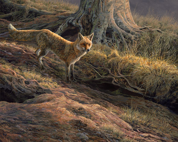 Red Fox Print - Canvas Reproduction