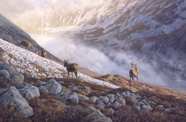 Red Deer Print - Oil painting of a stag roaring during the rut reproduced as a canvas print