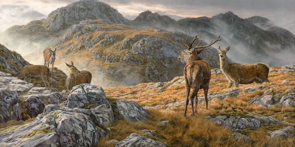 Oil painting: Roaring red deer stag with hinds. Druim Fada above Loch Hourn near Corran and Arnisdale in the Scottish Highlands.