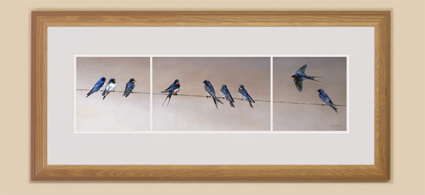 Framed swallows print for sale