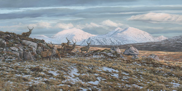 Red Deer Stags Print - Herd of red deer in the Scottish Highlands - An Teallach
