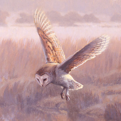 Hovering barn owl picture - Original oil painting depicting a hovering owl