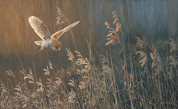 Oil painting of a barn owl hunting over reeds