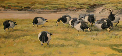 Branta leucopsis: See how initial sketches are developed into a composition