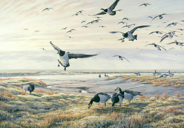 Oil painting of barnacle geese coming into land on a wetland salt marsh.