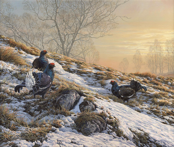 Game bird painting of  Black Grouse or Black Game