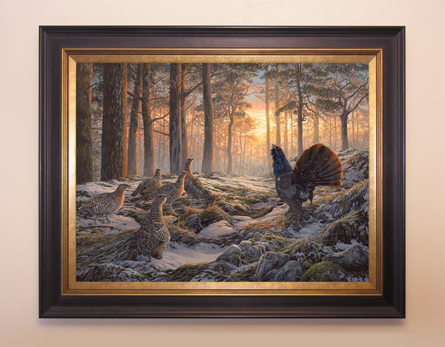 framed capercaillie oil painting for sale