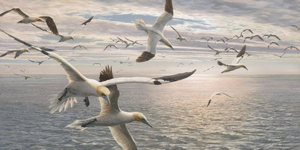 Gannets in Flight - Bird Painting by Martin Ridley