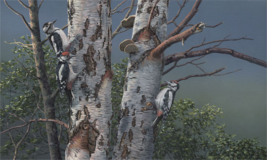 Original oil painting of great spotted woodpeckers