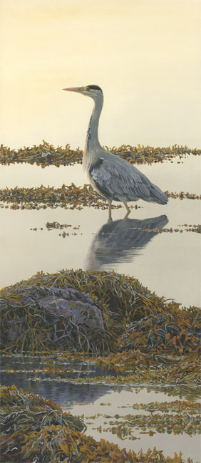 Grey Heron wading in the shallows - Bird Painting by Martin Ridley