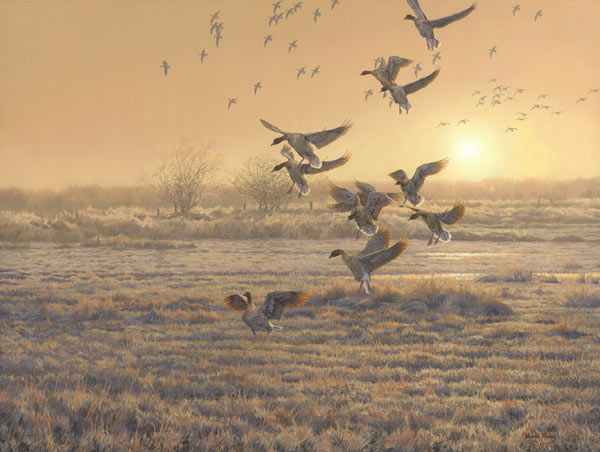 Pink-footed geese - wildfowl painting - oil on canvas. A flock of pink-footed geese landing in a field, more flocks of geese are coming out of the mist at sunrise