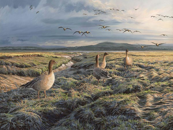 Original oil painting of geese at Wigtown Bay