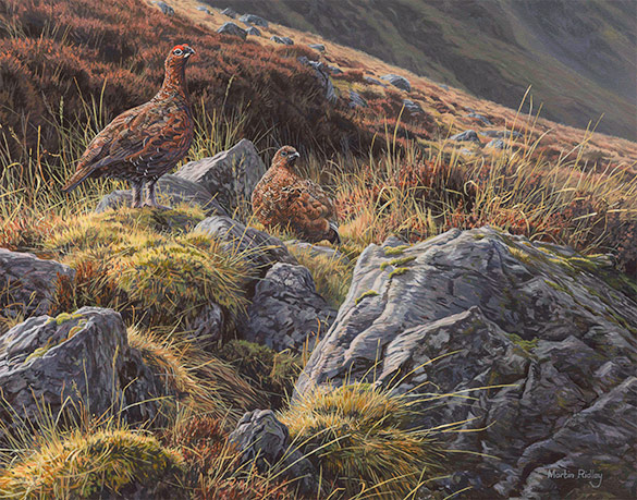 Red grouse oil paintings