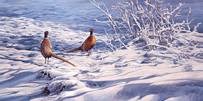 Pair of cock pheasants in the snow. Print for sale