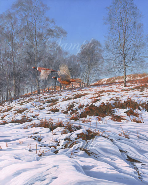 Flushed Pheasants - Two cock ring-necked pheasants taking flight across the snow - bird painting