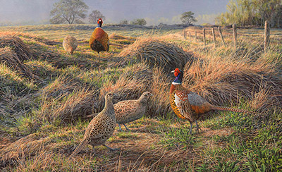 Sporting Art Woodcock print on canvas by Martin Ridley.