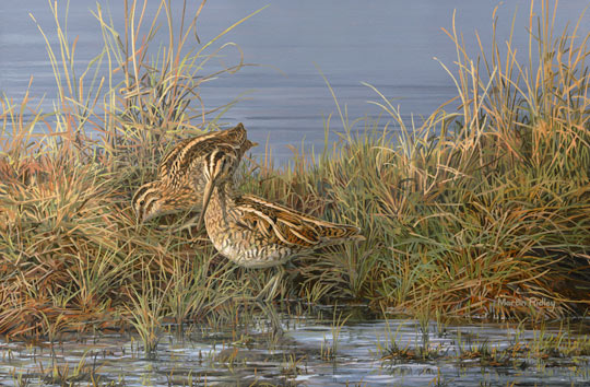 Common Snipe - Game bird pictures - Bird painting in oils