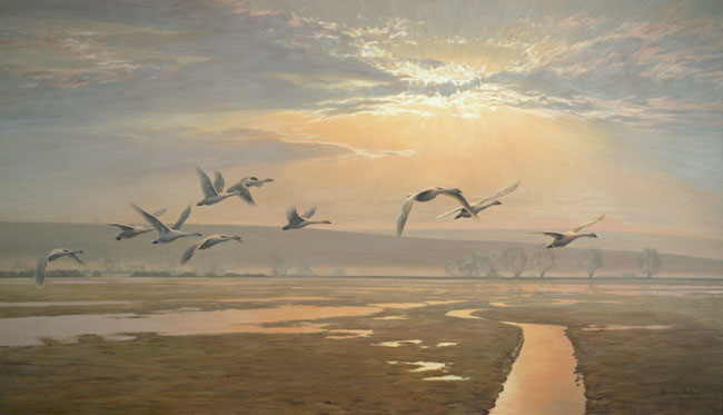 Bewick's Swans in Flight - Original Oil Painting by Martin Ridley. This large canvas was created at the Slimbridge Centre of Wildfowl and Wetlands Trust founded by Sir Peter Scott
