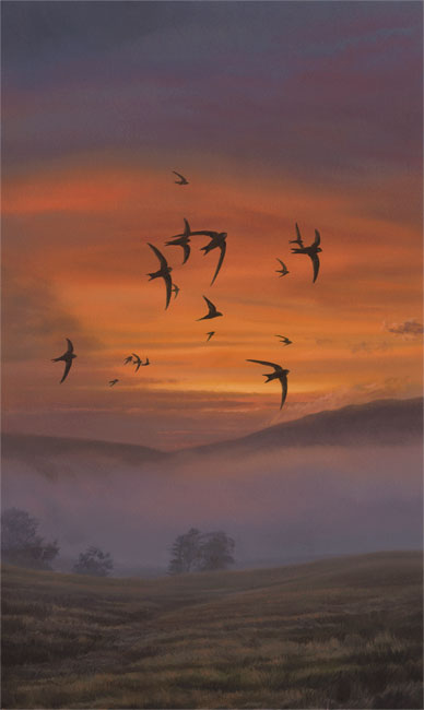 Swifts on a summer evening - Bird Painting by Martin Ridley