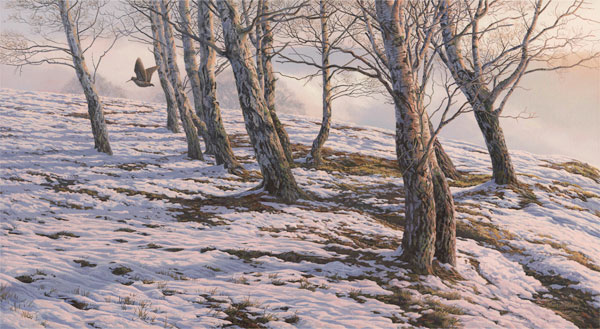 Oil painting of a woodcock over snow - Flushed woodcock flying through silver birches
