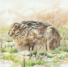 Brown Hare Watercolour Painting