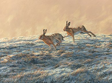Wildlife art UK - oil painting- brown hares in action