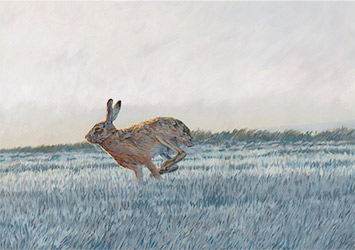 Wildlife artist UK - Action painting of brown hares in Norfolk
