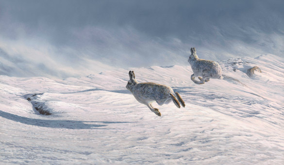 running mountain hares picture