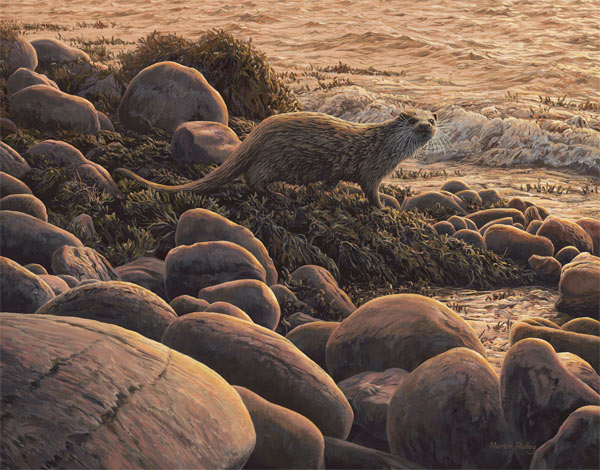 "Martin Ridley european otter painting for sale - ""Copper Shoreline"" Original oil painting of an otter at the waters edge."