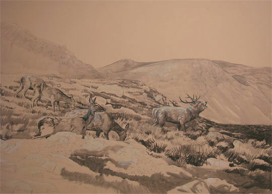 Red Deer Stag and Hinds in Glen Lyon