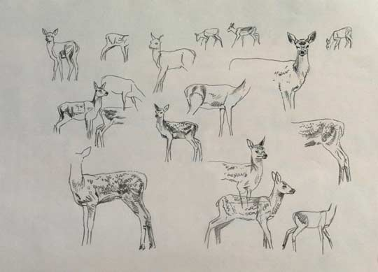 Sketches of red deer calves