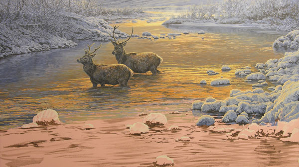 Oil painting of red deer stags crossing a river.