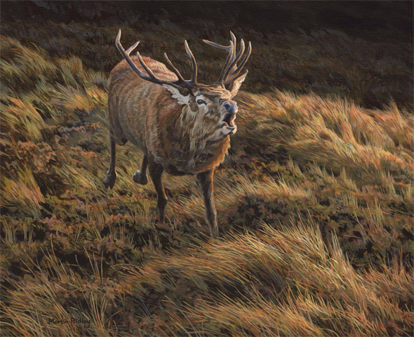 Charging red deer stag picture by Martin Ridley