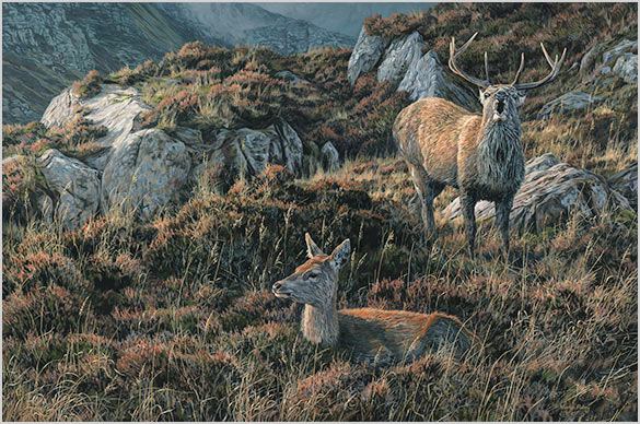 Eight Pointer - Red Deer Stag & Hind Oil Painting for Sale