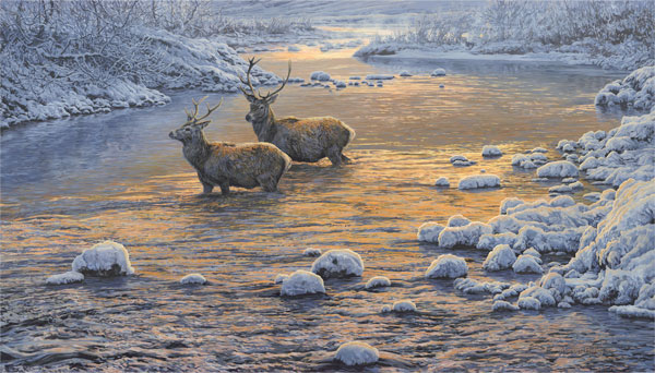 Painting of red deer stags river crossing.