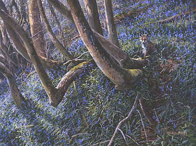 Original Wildlife Art : Fox cub in a bluebell wood