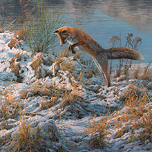 Pouncing Red Fox - Original Oil Painting