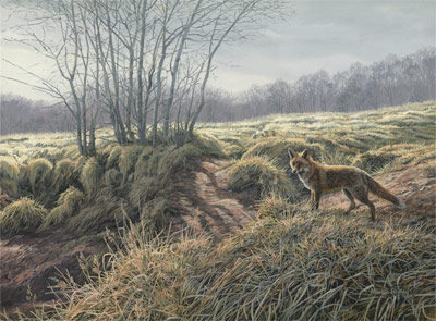 Wildlife Painting : Red Fox, Vulpes vulpes