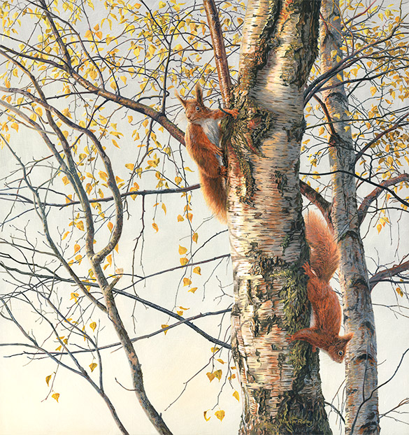 Pair of red squirrels in a silver birch. Oil painting by Martin Ridley