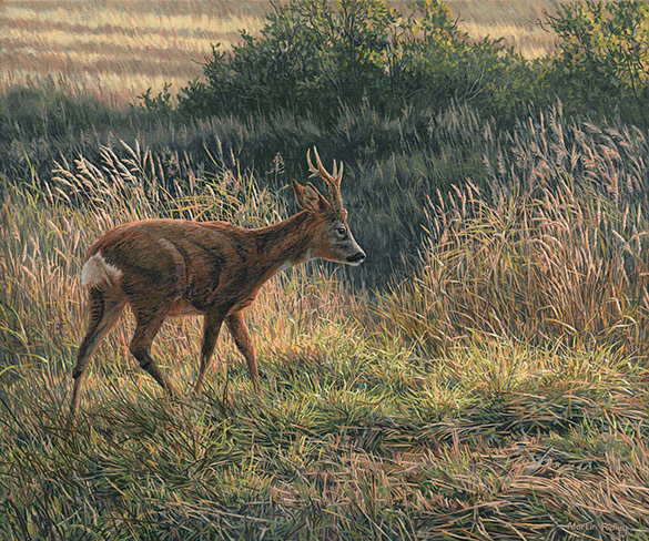 Chasing Roe Bucks Picture - Roe buck painting by Martin Ridley