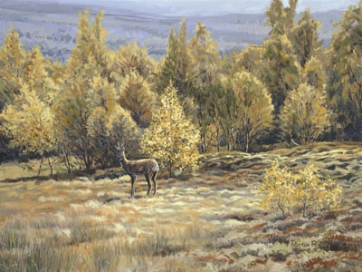 Paintings of roe deer by Martin Ridley -  Roe buck paintings in the Scottish Highlands - Original oil painting on canvas board