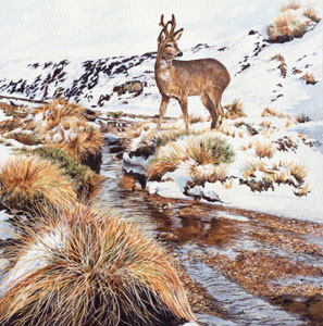 Roe deer pictures - Detail from an acrylic painting of a roe buck in snow