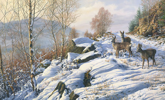 Three doe roe deer crossing a snow covered track. Roe deer oil painting by Martin Ridley available as a canvas print