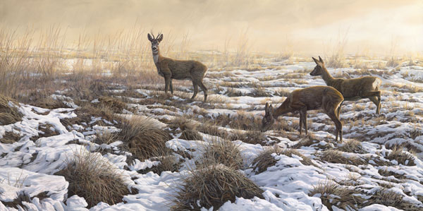 Roe deer pictures - First snow roe deer print from an oil painting of a roe buck and two does in the snow by Martin Ridley