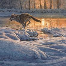 Wildlife art - wildlife paintings by artist Martin Ridley