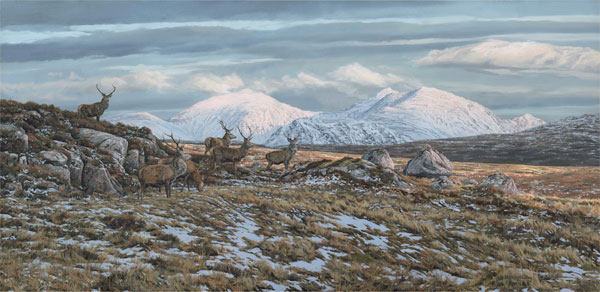 Oil painting of a herd of red deer stags with a view of a snow covered An Teallach in the background.