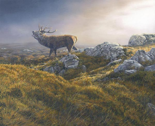 Bellowing red deer stag - Rutting behaviour