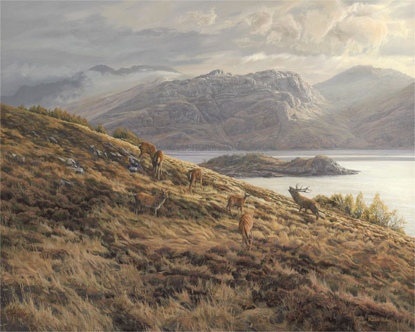 Red Deer stag and hinds above Loch Hourn near Arnisdale