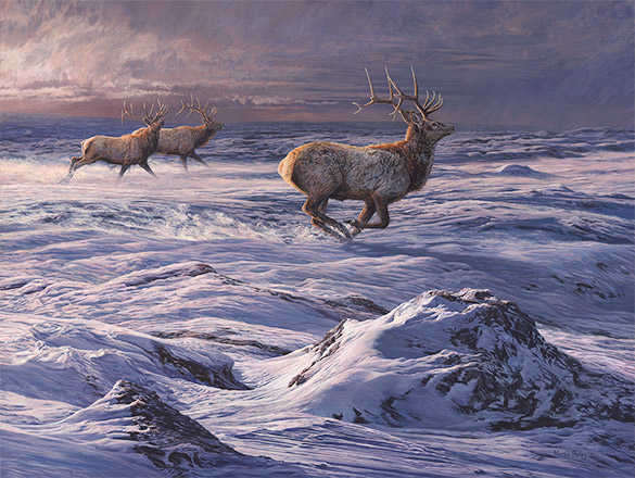 Running American Elk or Wapiti  original oil painting
