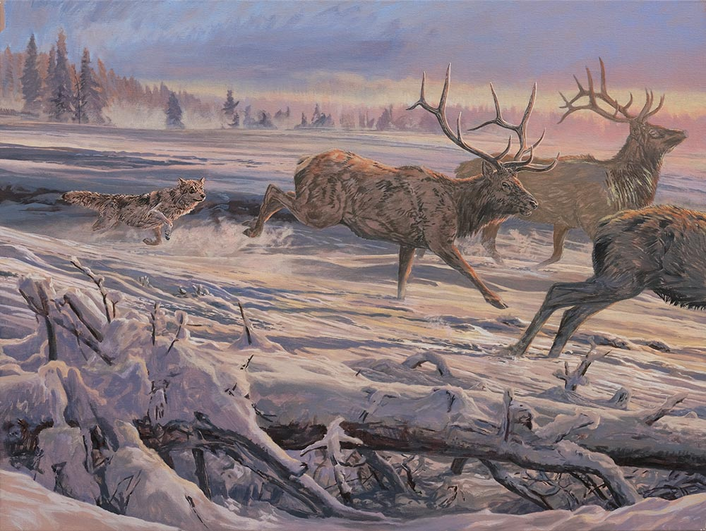 Canvas 2: Diptych oil painting of Gray Wolves hunting American Elk or Wapiti